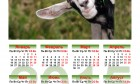 2015 Calendar With Cute Baby Goat