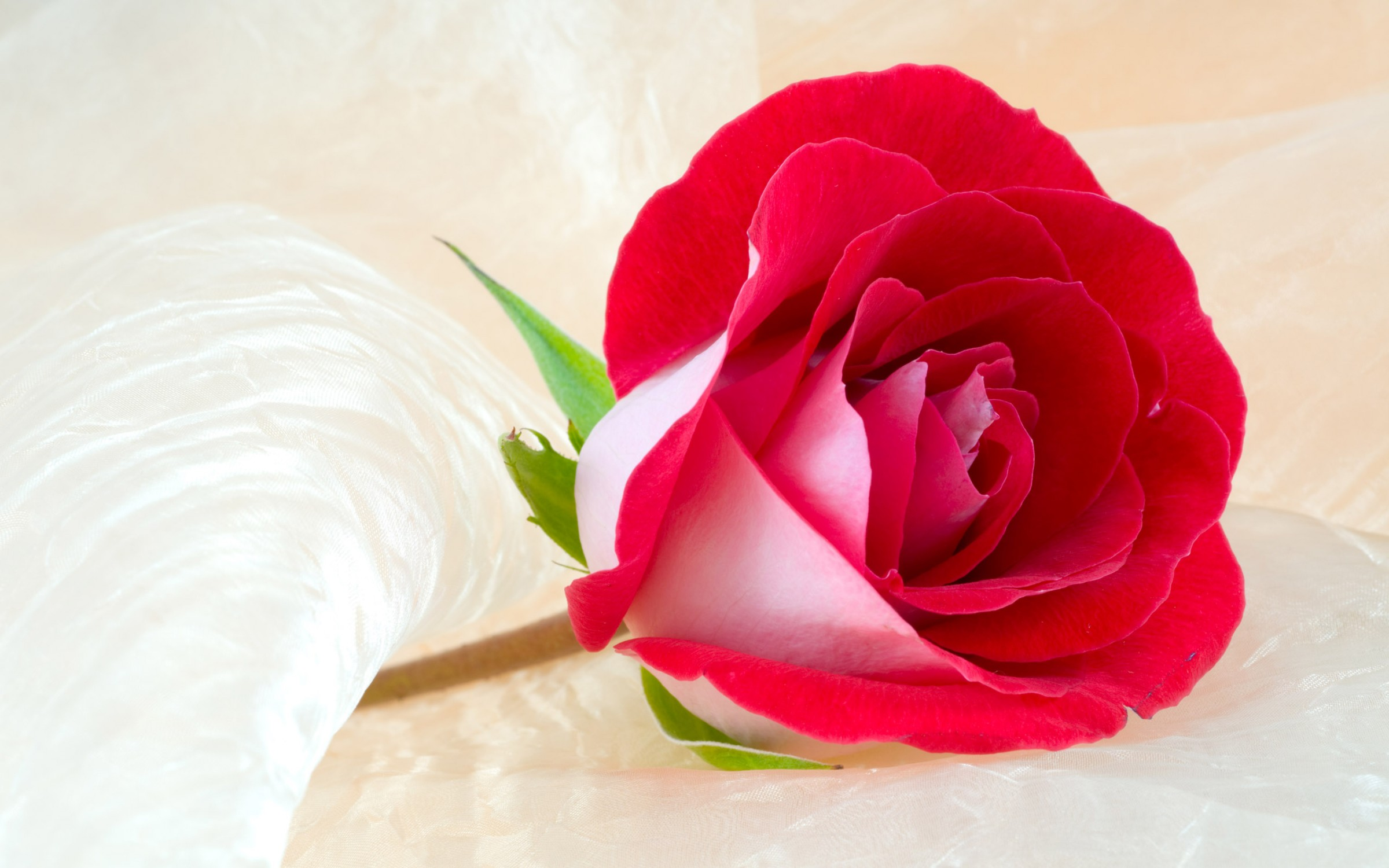 37 beautiful roses hd wallpapers elsoar - Beautiful rose wallpaper ...
