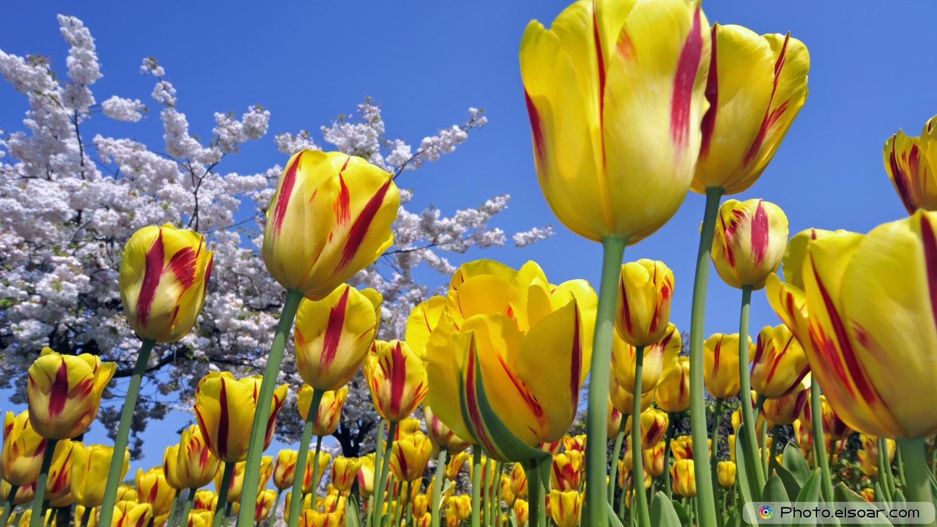 Hd wallpaper yellow flowers - A Large Amount Of Yellow Flowers Hd Full Free Wallpaper