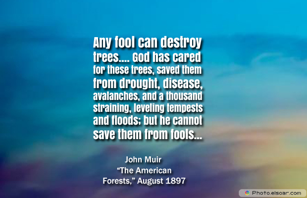 Any fool can destroy trees