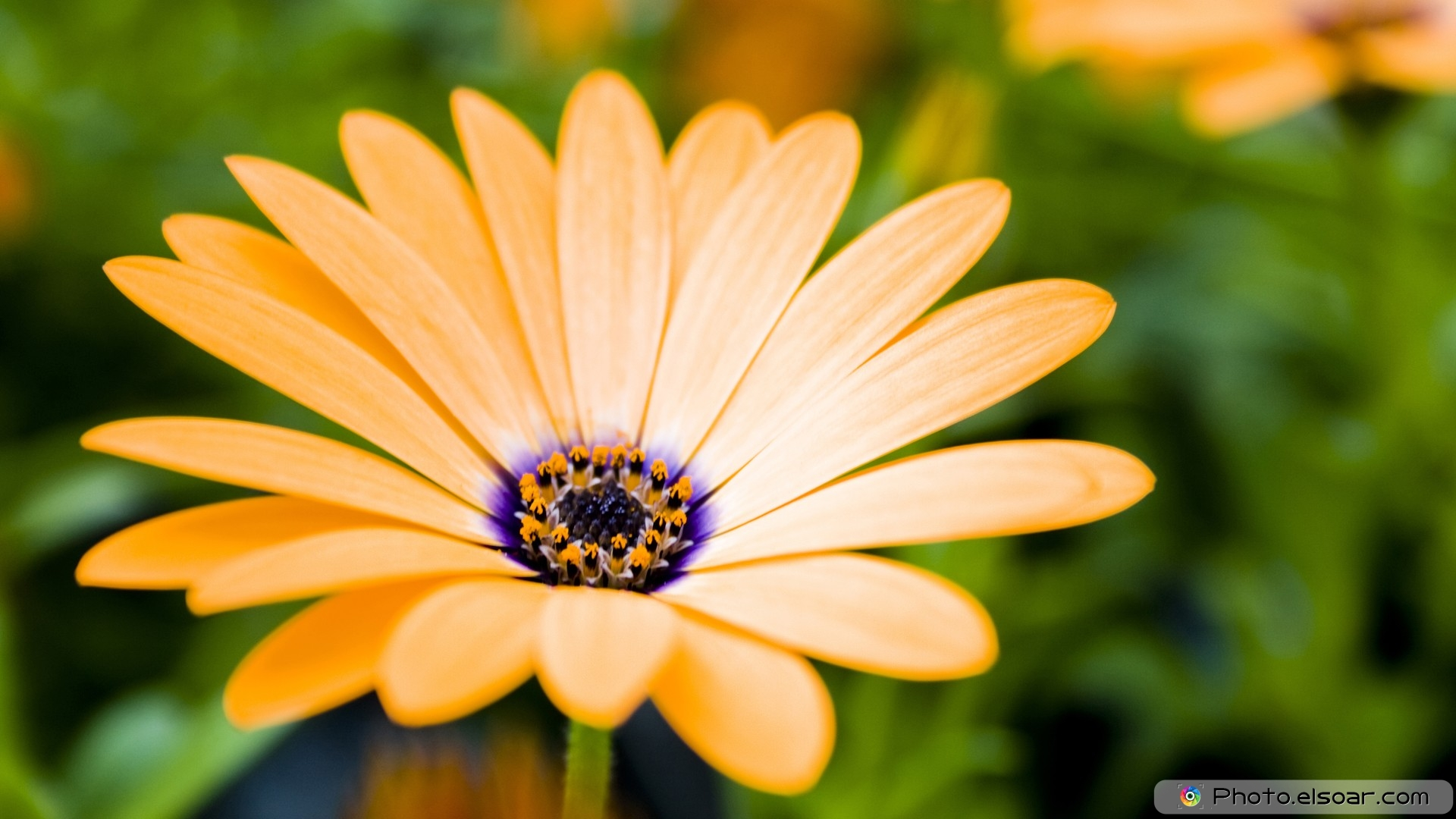 Hd wallpaper yellow rose - Beautiful Yellow Rose Amid Grass Wallpaper Hd
