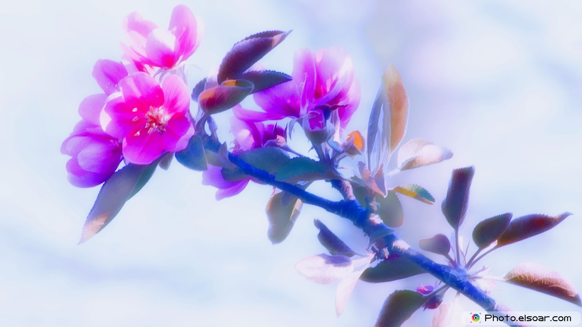 10 Multi-Colored Flowers Full HD Wallpapers, Free Download