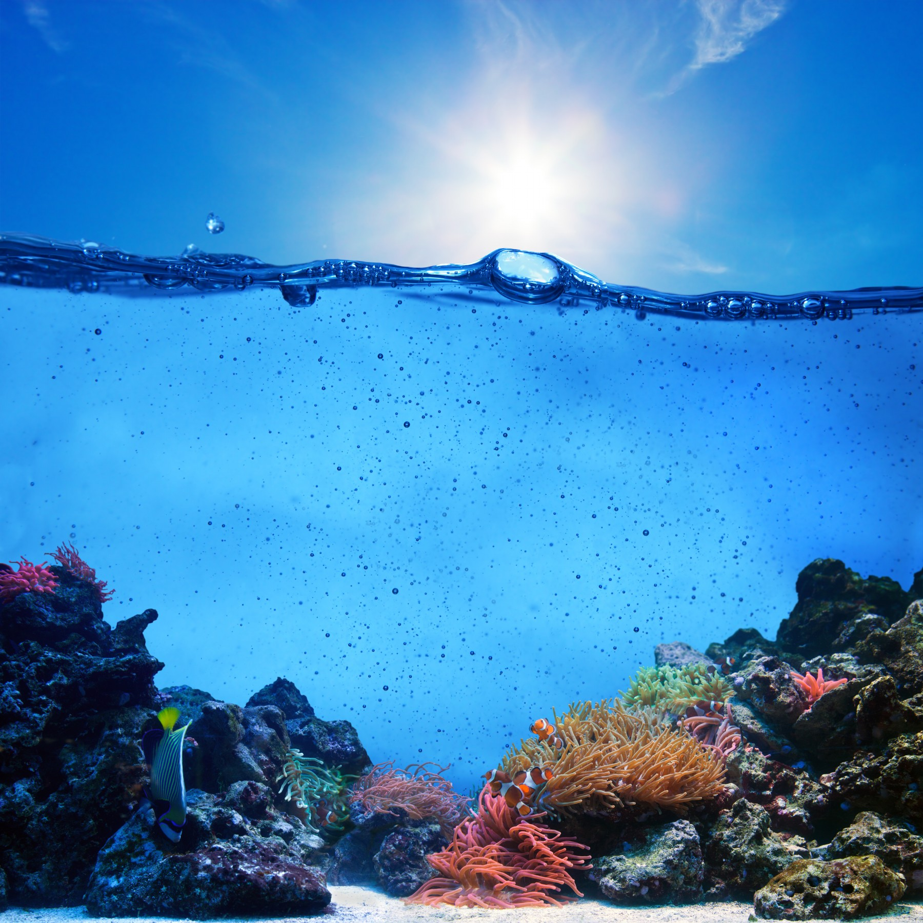 Deep Sea, Coral Reefs In Pictures
