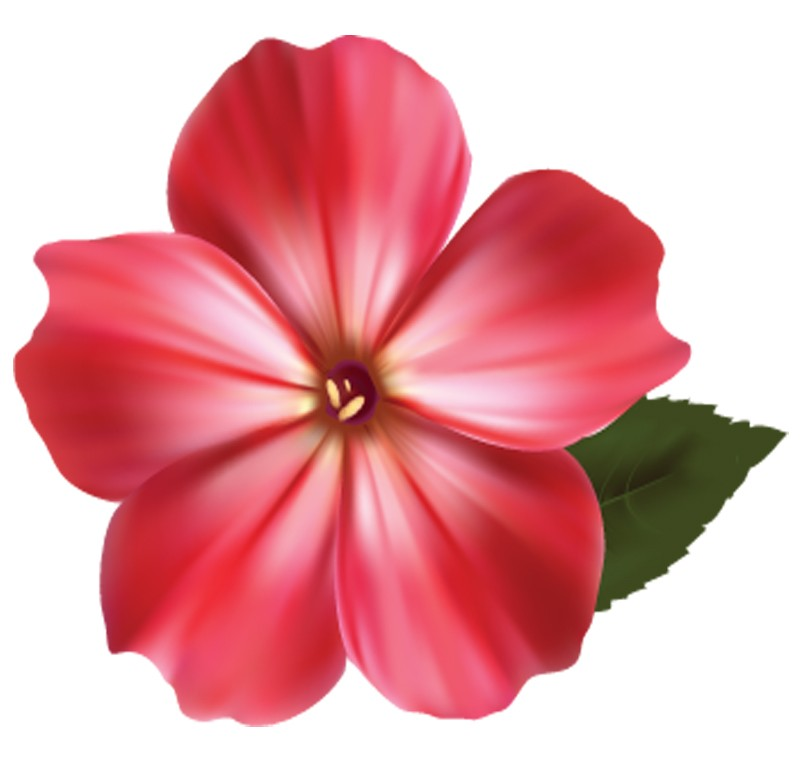 exquisite different vivid flowers. hq images  elsoar, Natural flower