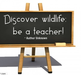 Discover wildlifebe a teacher