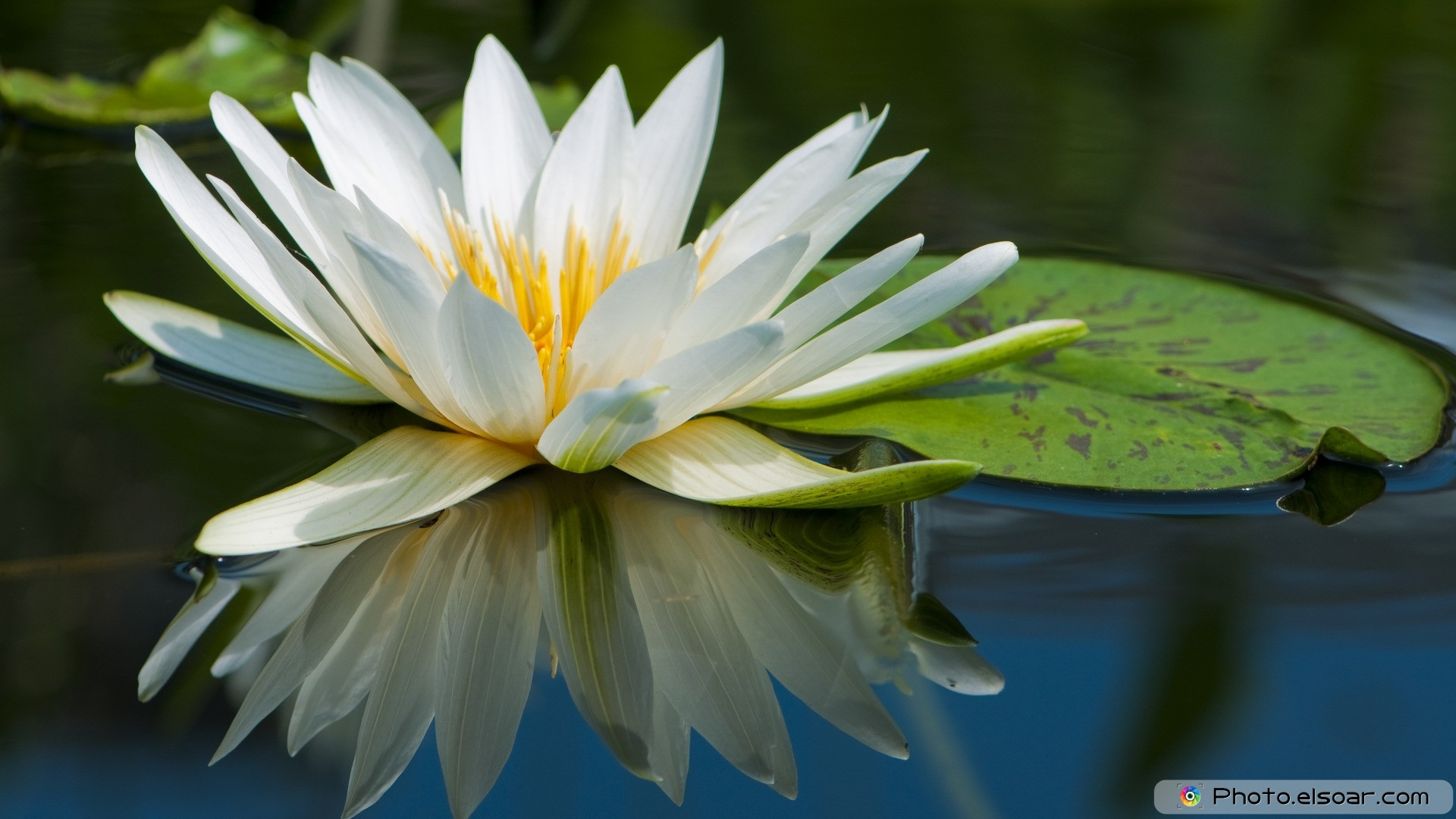 Download beautiful flowers pictures beautiful nature images hd download beautiful flowers wallpaper izmirmasajfo