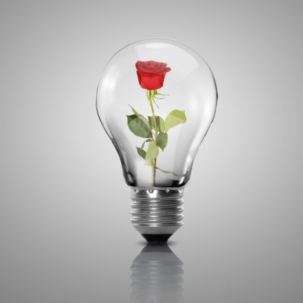 Electric light bulb and flower inside it