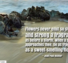 Flowers never emit so sweet and strong