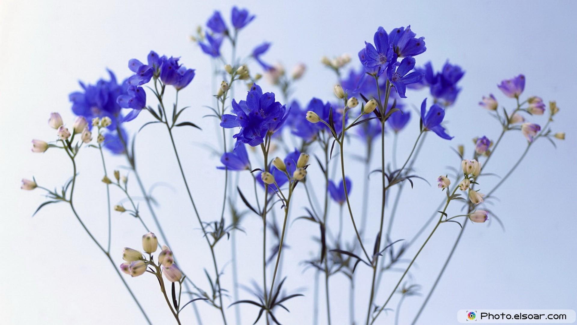 free beautiful nature flowers wallpaper