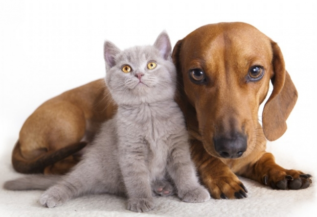 مشاركتي في مسابقة هل تعلم ؟ Funny-Cats-and-Dogs-
