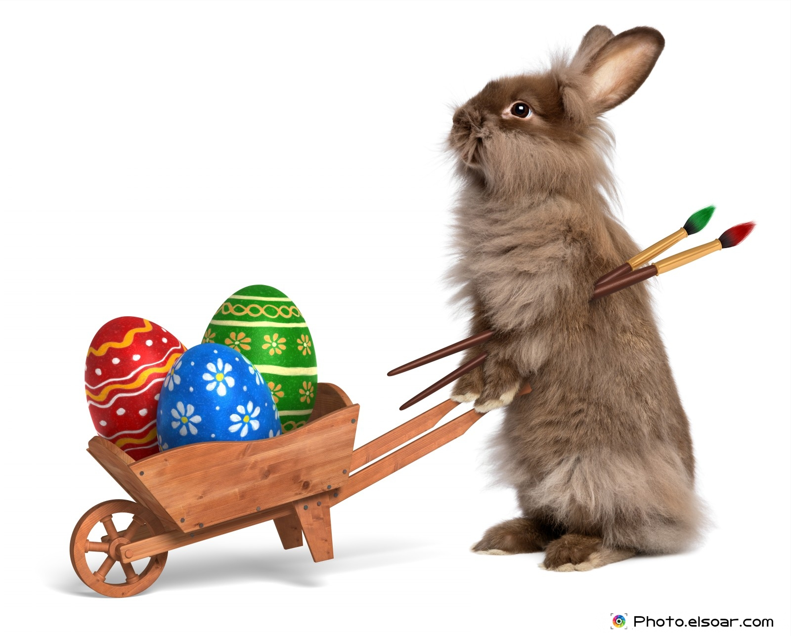 Funny Easter Bunny stories, jokes and pictures - Funny Jokes