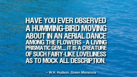 Have you ever observed a humming-bird moving about…