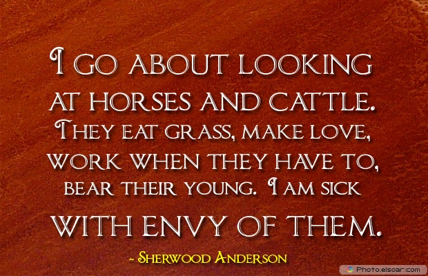 I go about looking at horses