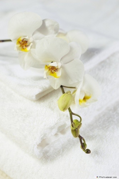 Image Of White Orchid