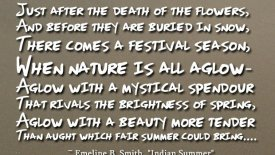 Just after the death of the flowers…