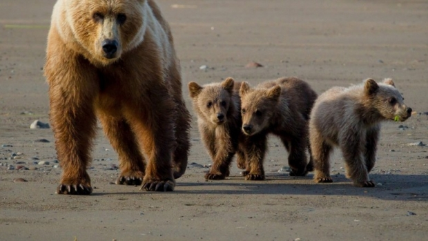 Most Beautiful Bears Pictures 20
