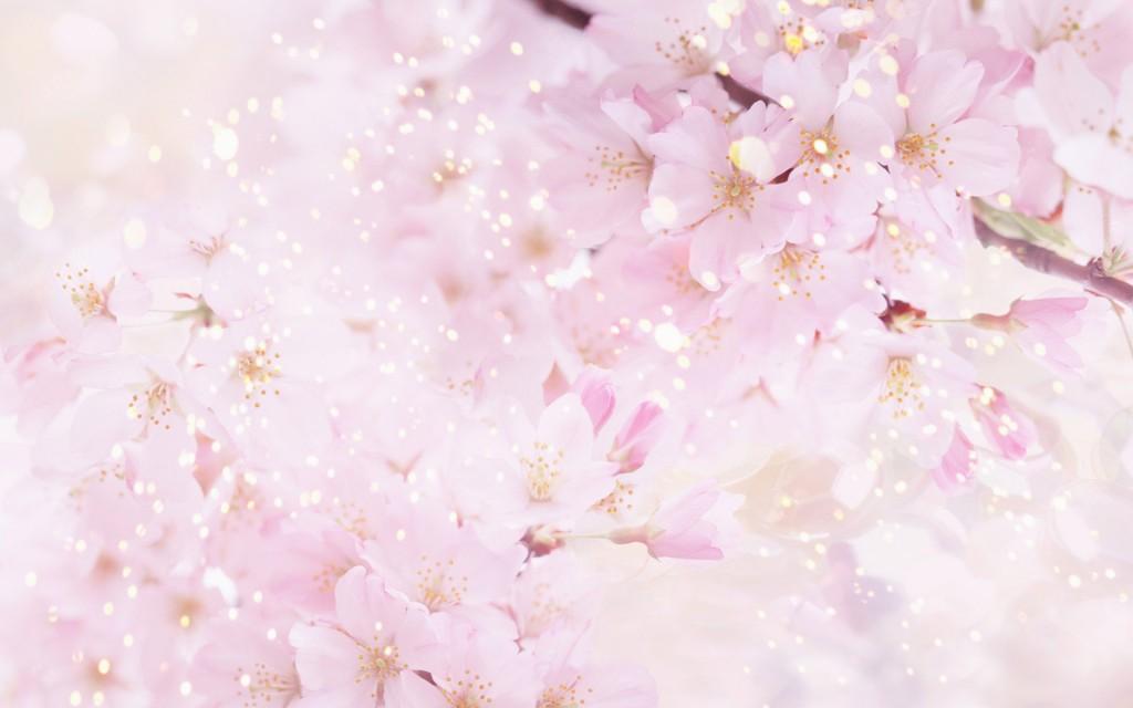 Бесплатные картинки цветов 2