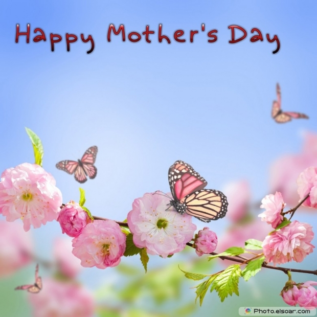 Mothers Day Cards Of Pink Flower with Butterflies A