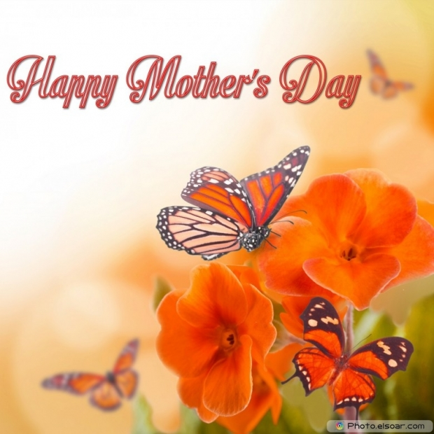 Mothers Day Cards Of Pink Flower with Butterflies B