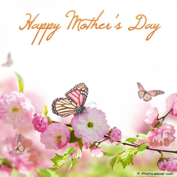 Mothers Day Cards Of Pink Flower with Butterflies D