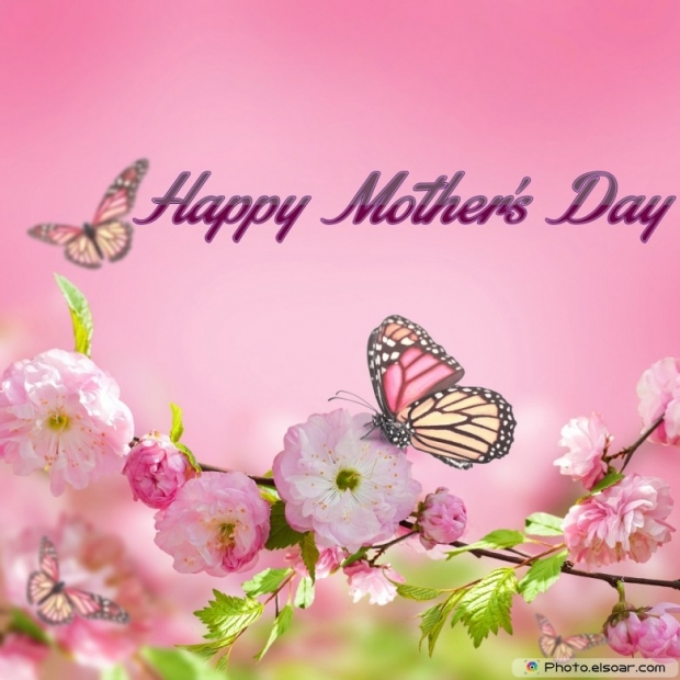 Mothers Day Cards Of Pink Flower with Butterflies E