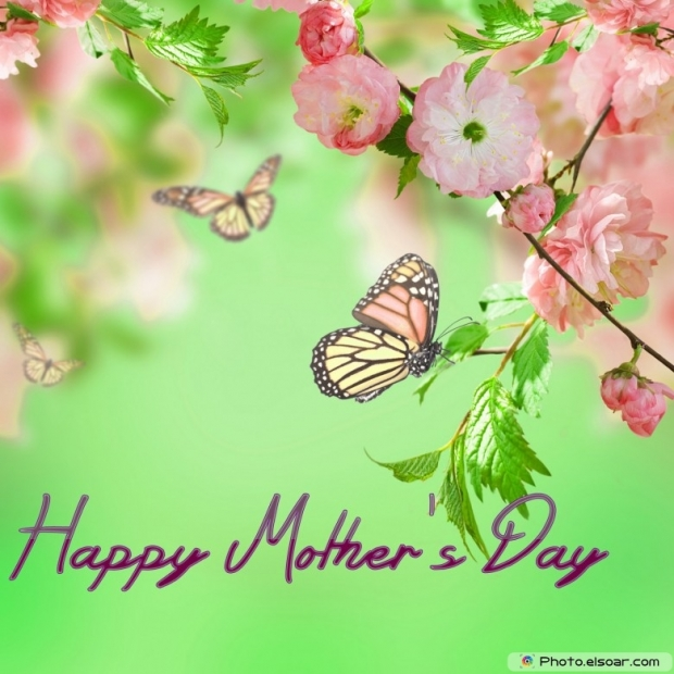 Mothers Day Cards Of Pink Flower with Butterflies F