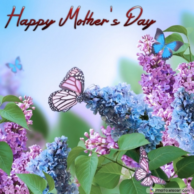 Mothers Day Cards Of Pink Flower with Butterflies G