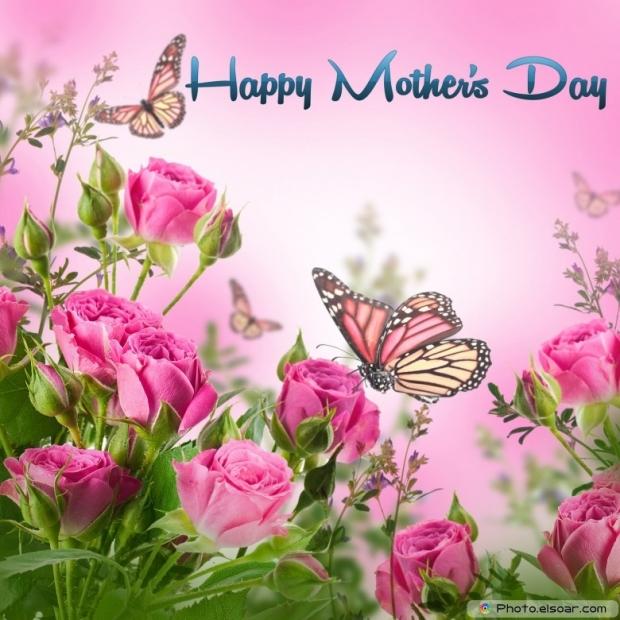 Mothers Day Cards Of Pink Flower with Butterflies I