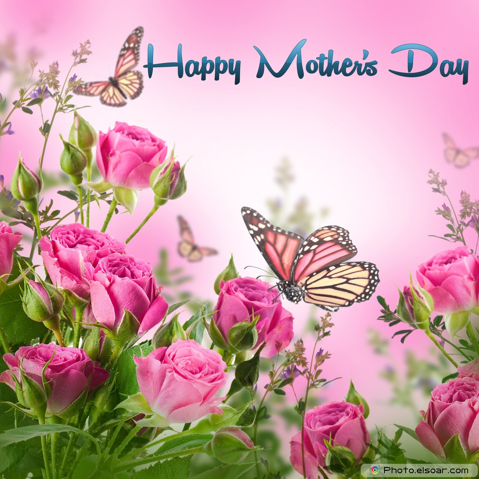 mothers day cards of pink flowers with butterflies  elsoar, Natural flower