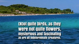 [N]ot quite birds, as they were not quite flowers…
