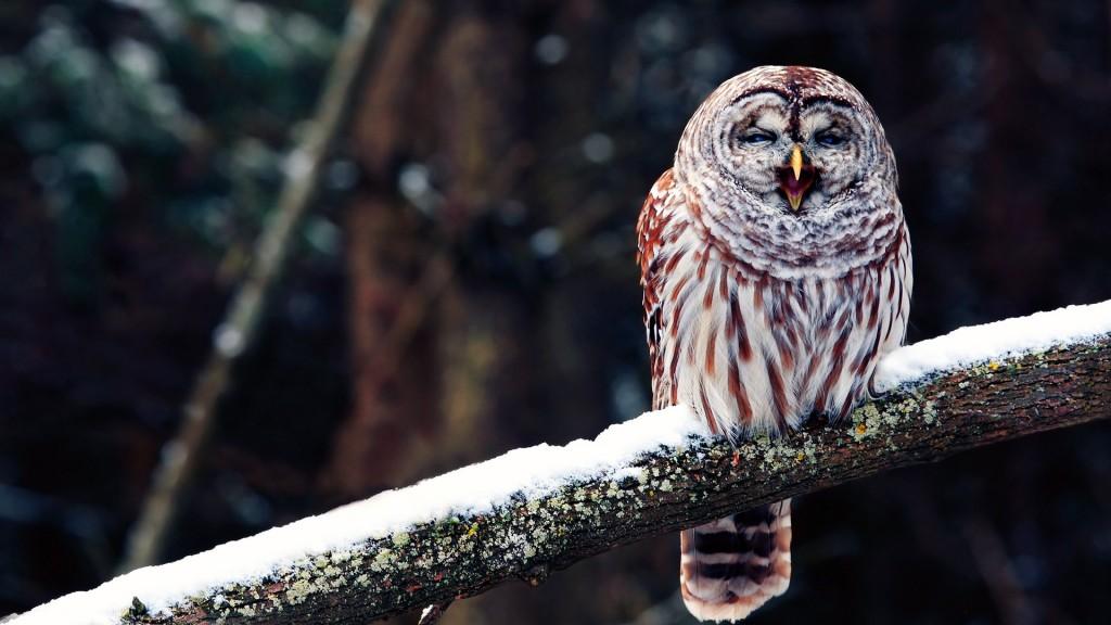 Owl desktop wallpaper hd - photo#11