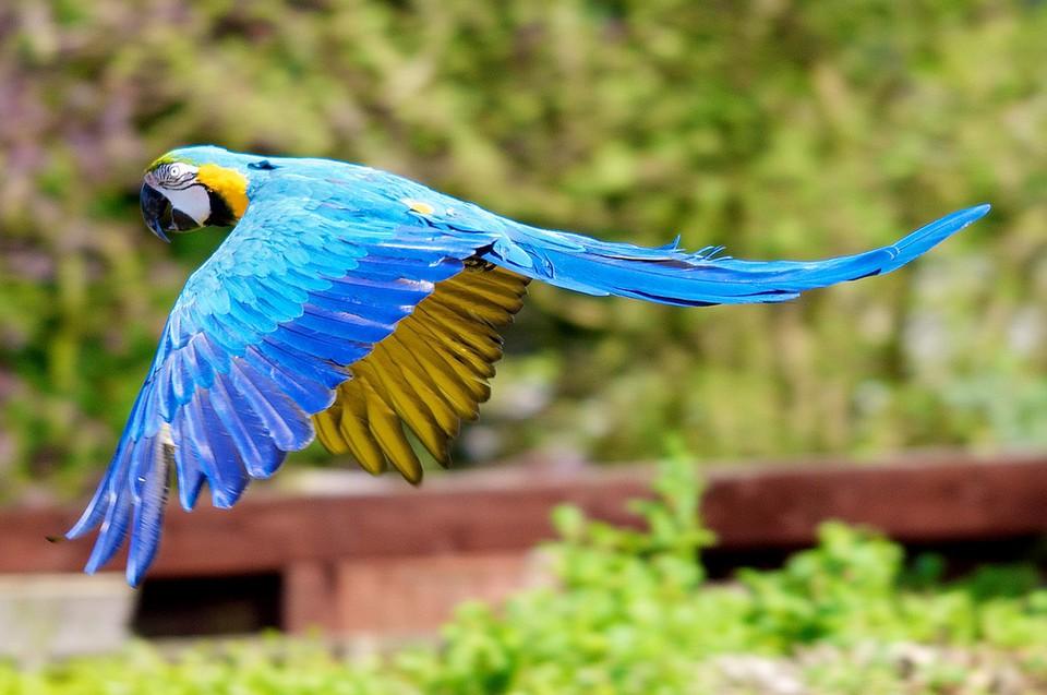 parrots wallpaper bird - photo #21