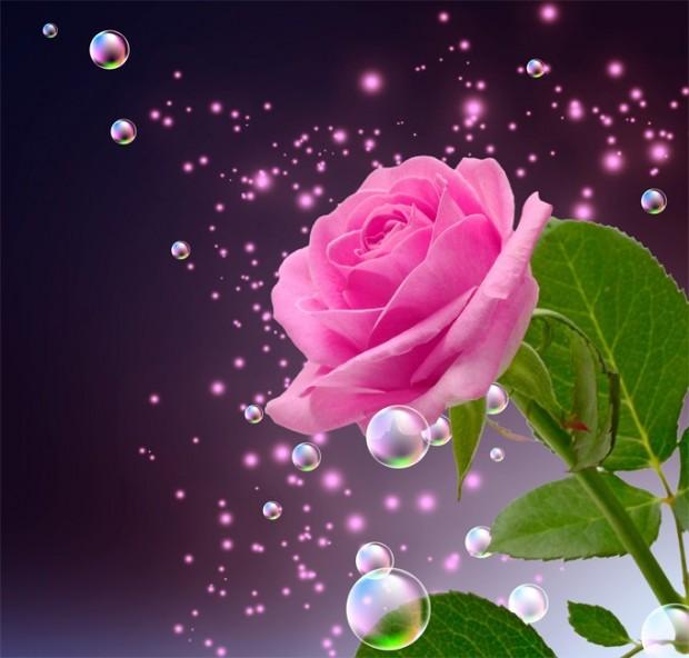 Love Beautiful Roses