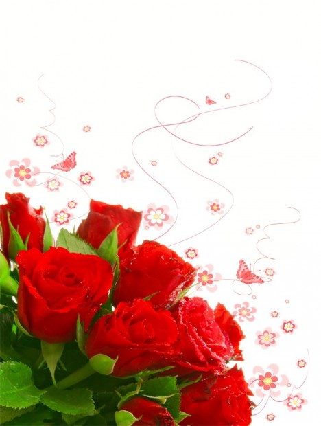 Most Beautiful Roses On white background