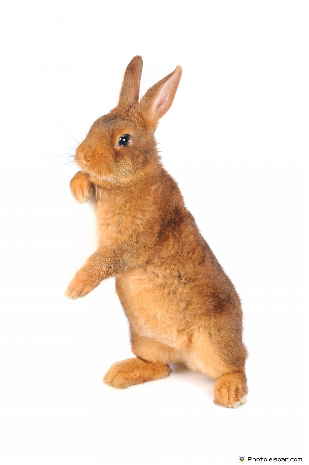 The Rabbits In Cute Pictures Elsoar