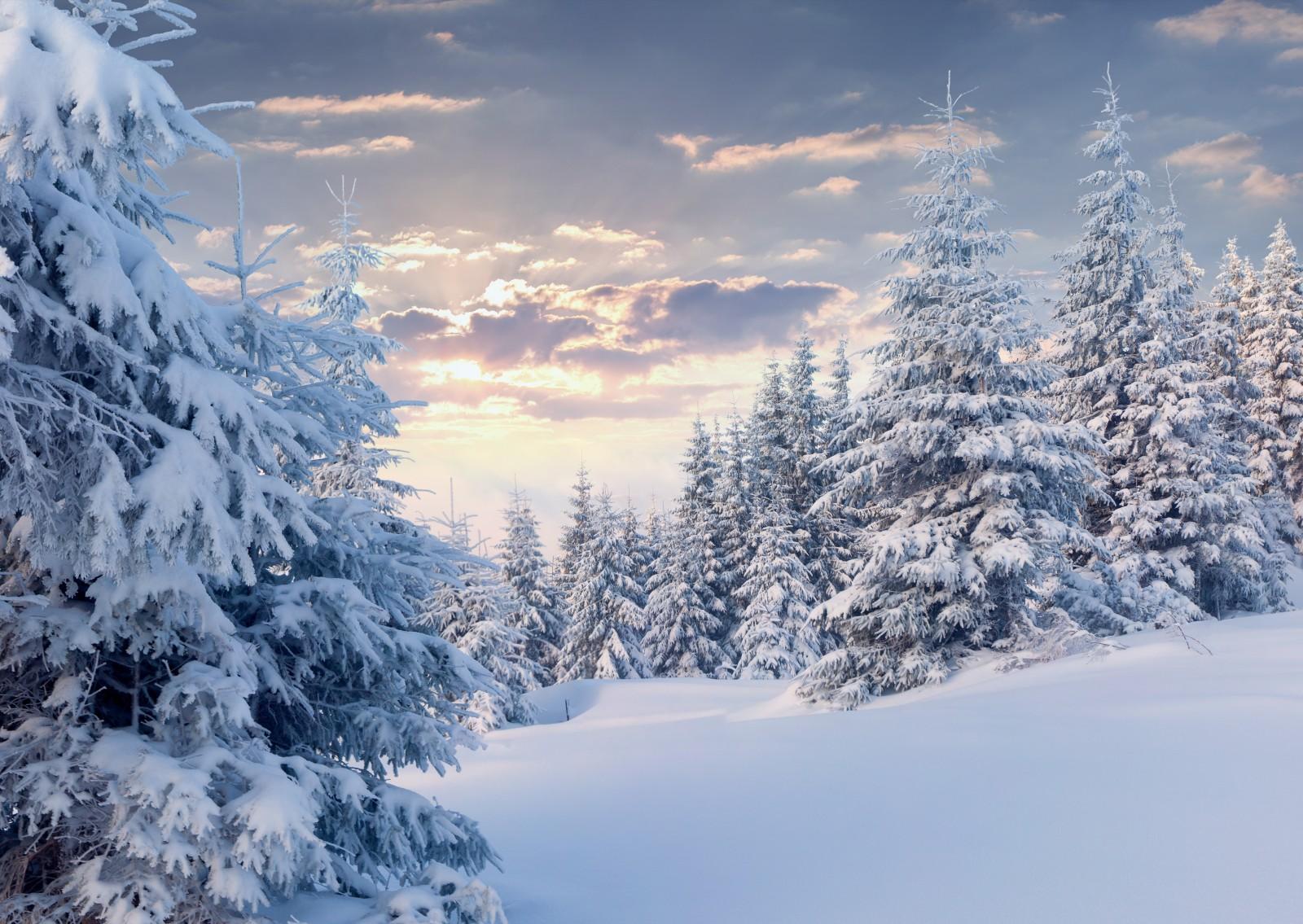 1920 x 1200 1353k 137 winter woods