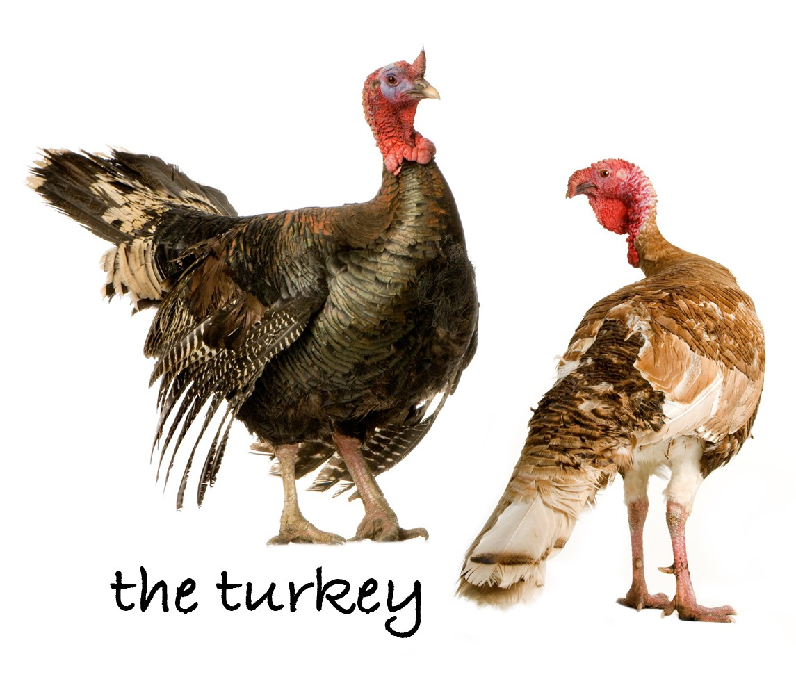 The Turkey