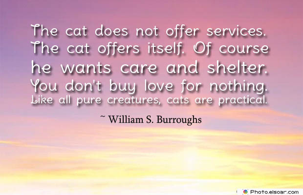 The cat does not offer services