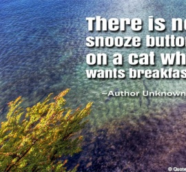 There is no snooze button