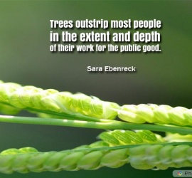 Trees outstrip most people in the extent
