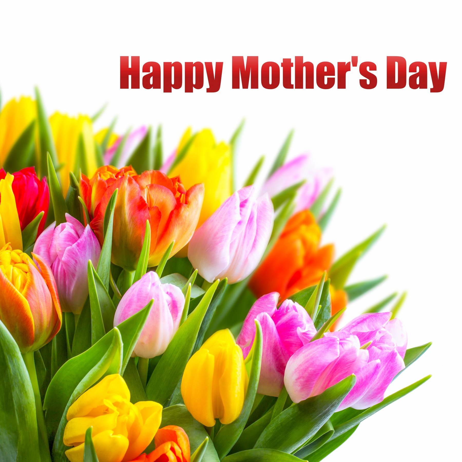 send tulips flowers for moms to celebrate mother's day  elsoar, Beautiful flower