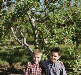 Two Cute Boys Standing In Front Of An Apple Tree