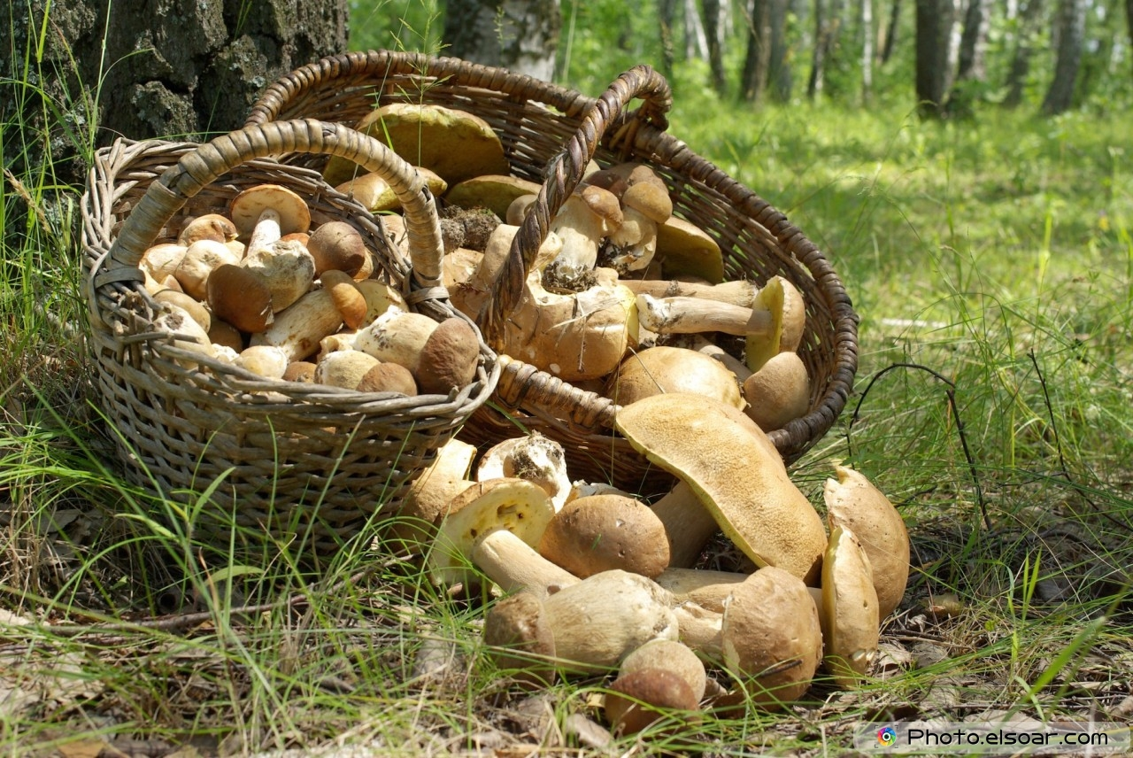 Two baskets of mushrooms in the forest