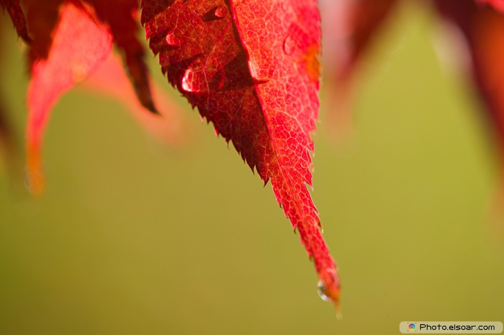 Water On Autumn Leaves