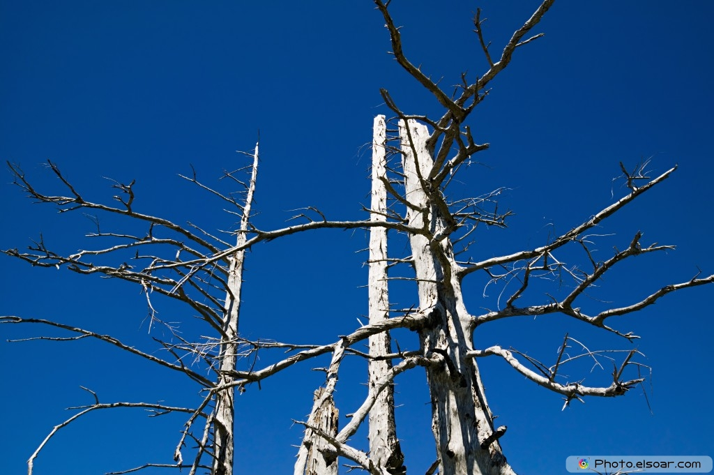 Weathered Trees