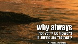 """Why always """"not yet""""? Do flowers in spring say """"not yet""""?"""