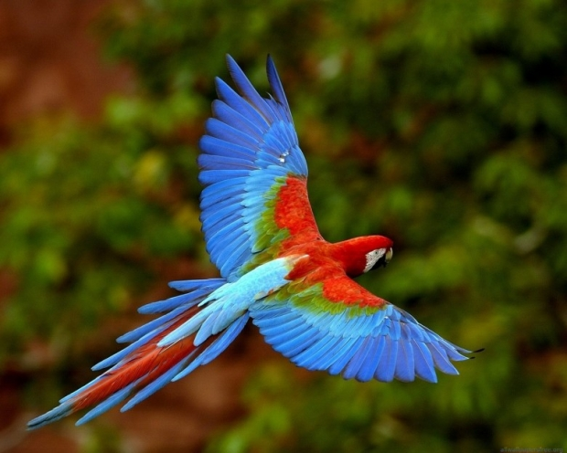 amazing birds pictures 1