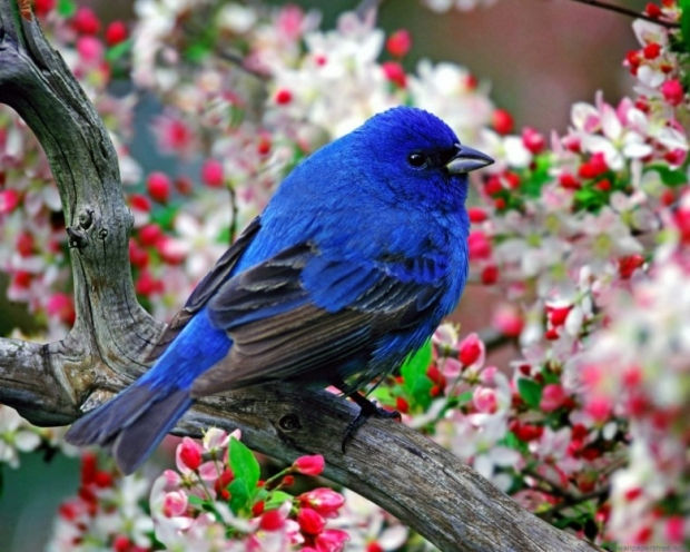 amazing birds pictures 6